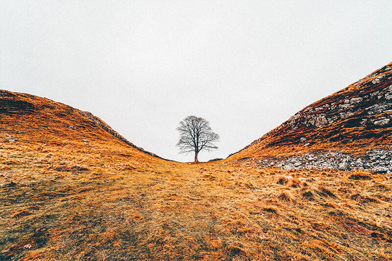 The Sycamore Tree at the Sycamore gap