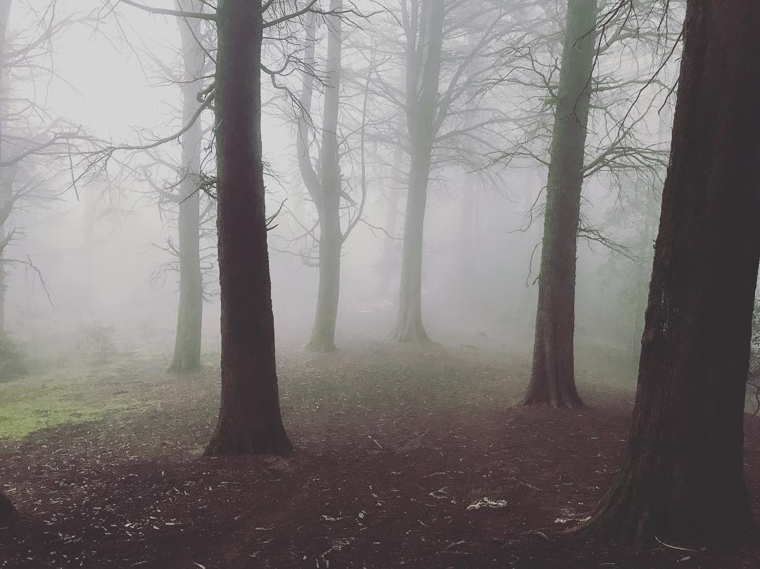 A foggy scene in a forest with only a few trees