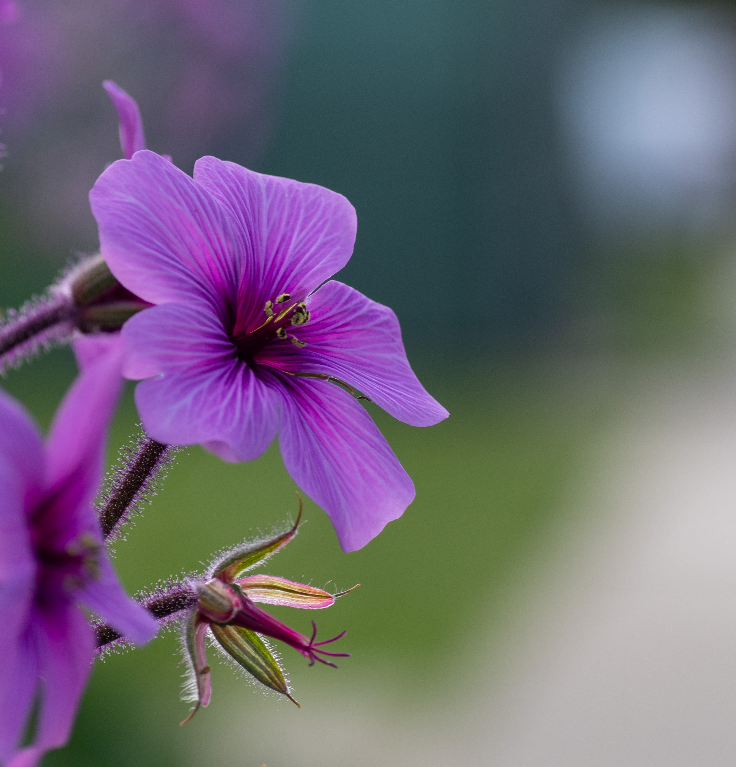 An image of a purple flower