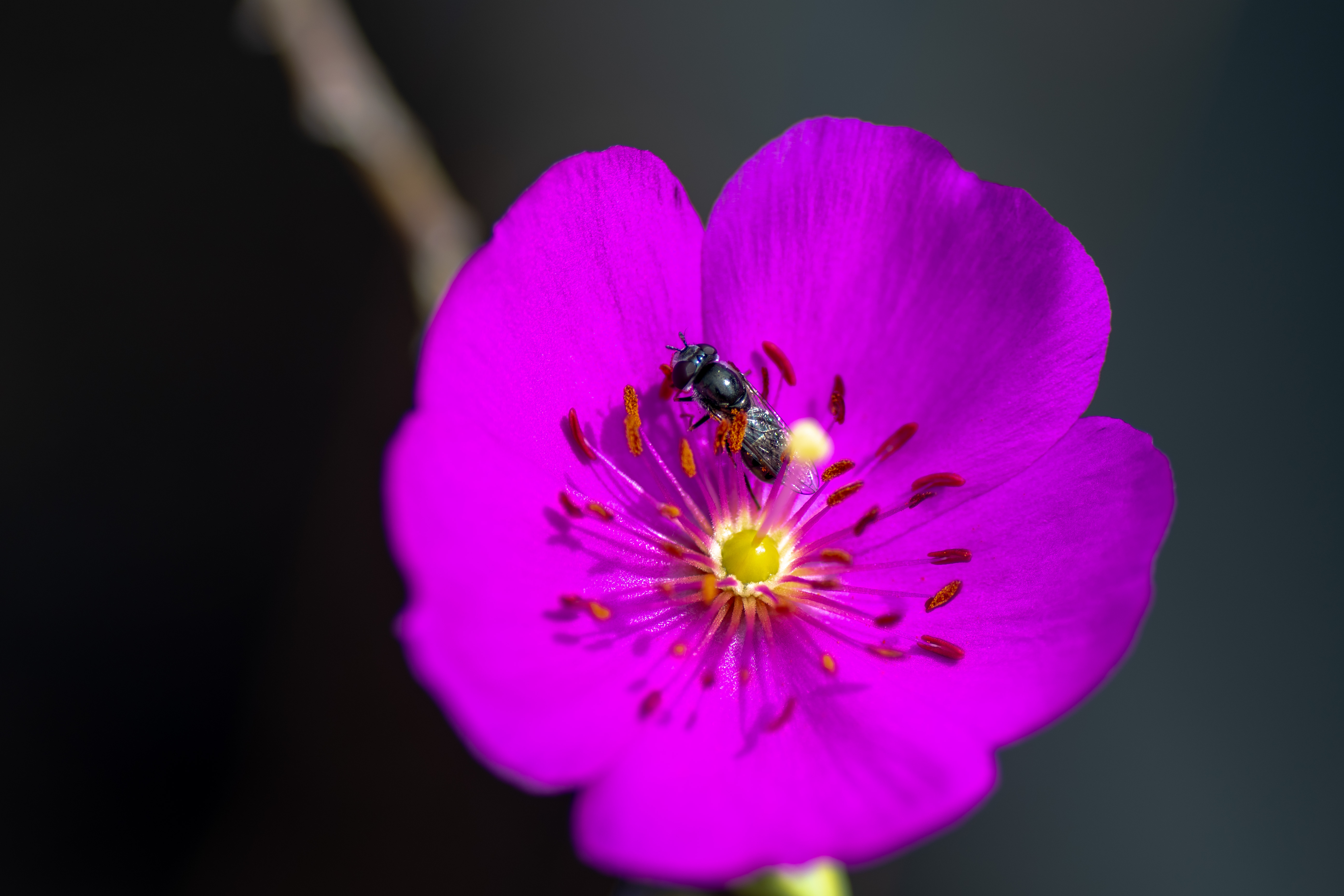 A purple flower with a tiny ant on a petal