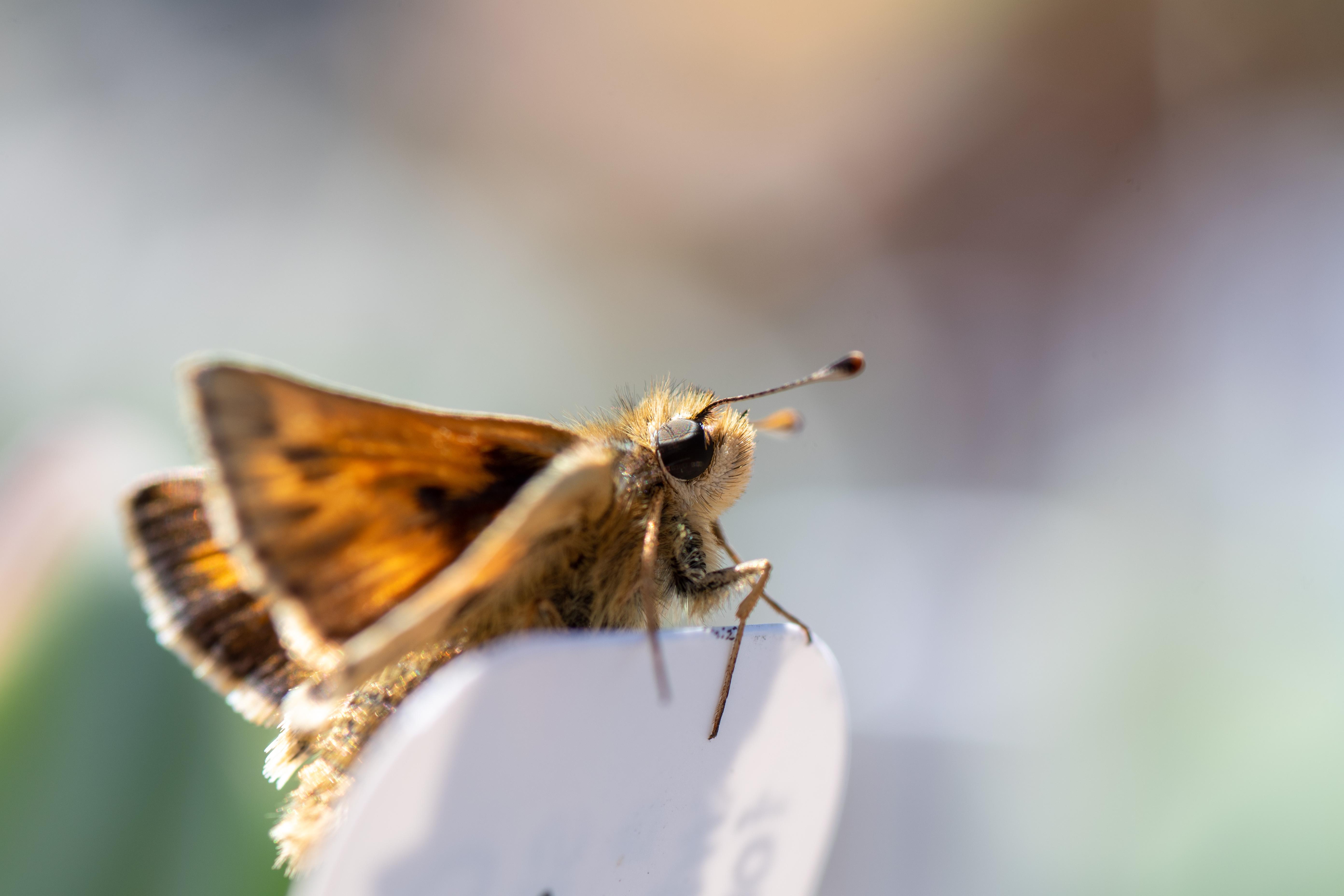 A close up a moth sitting in the sun