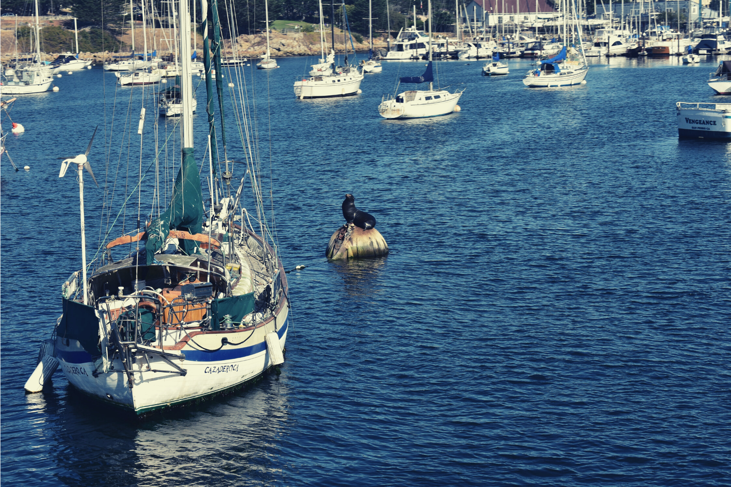 A docked sail boat next to a rock with a seal on it