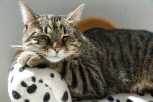 Burnout cat