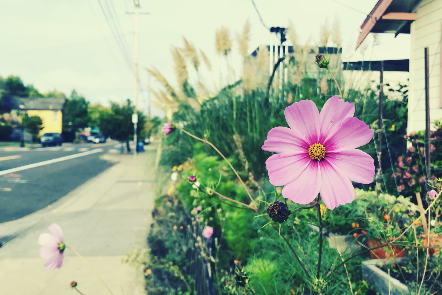 A pink flower in the foreground followed by a blurry view down a sidewalk