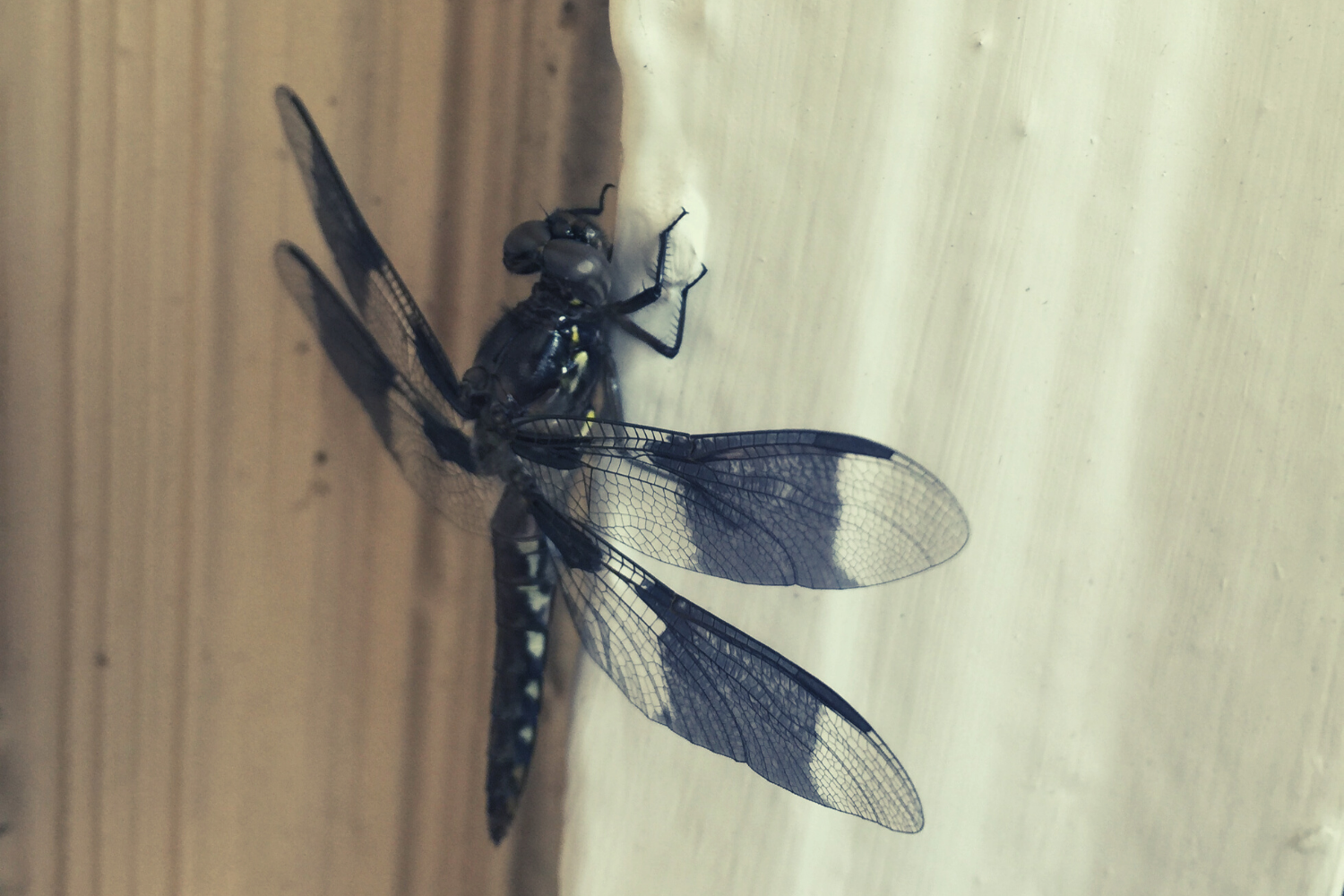 A dragonfly on a door frame