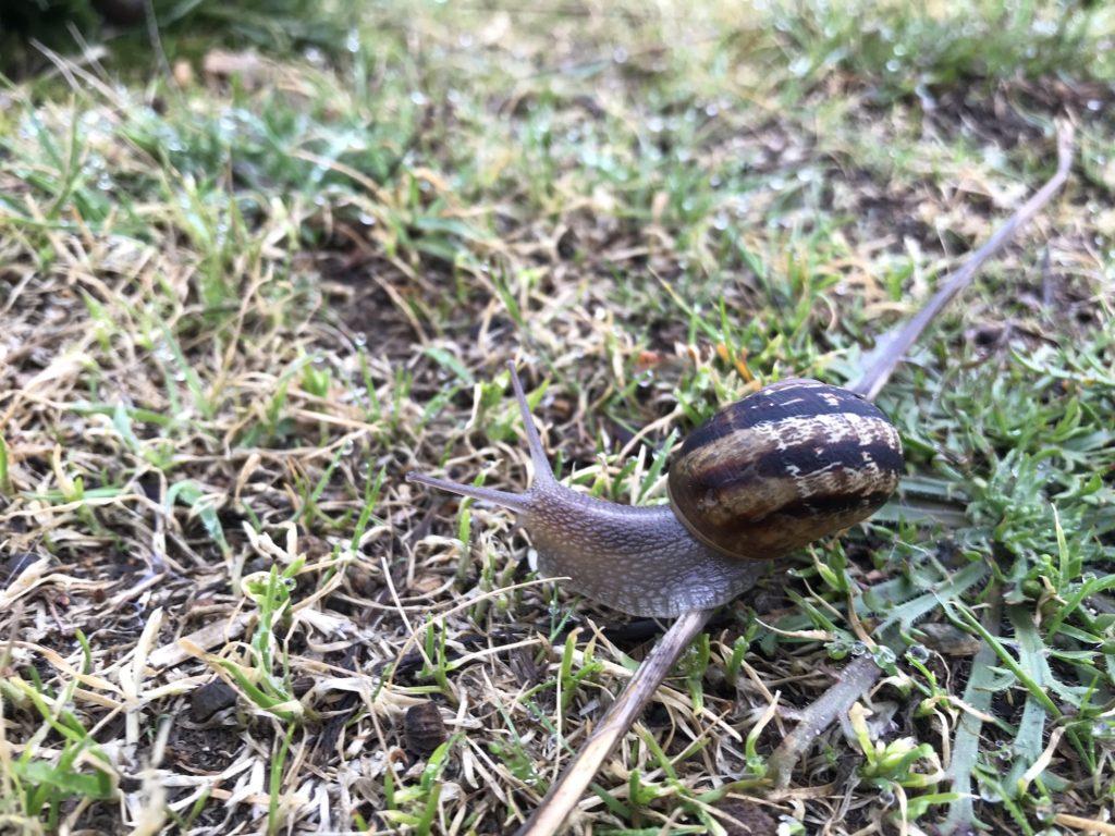 Having PE's has helped me meet many new snail friends