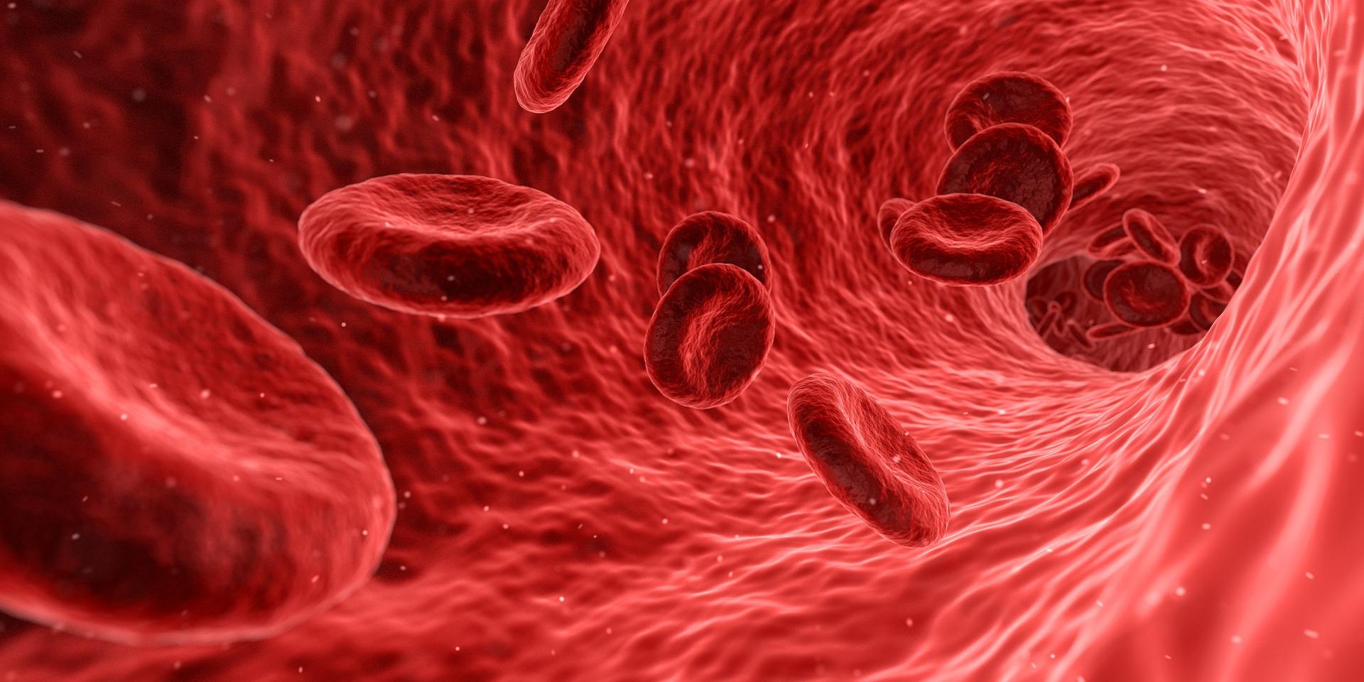 clot free veins
