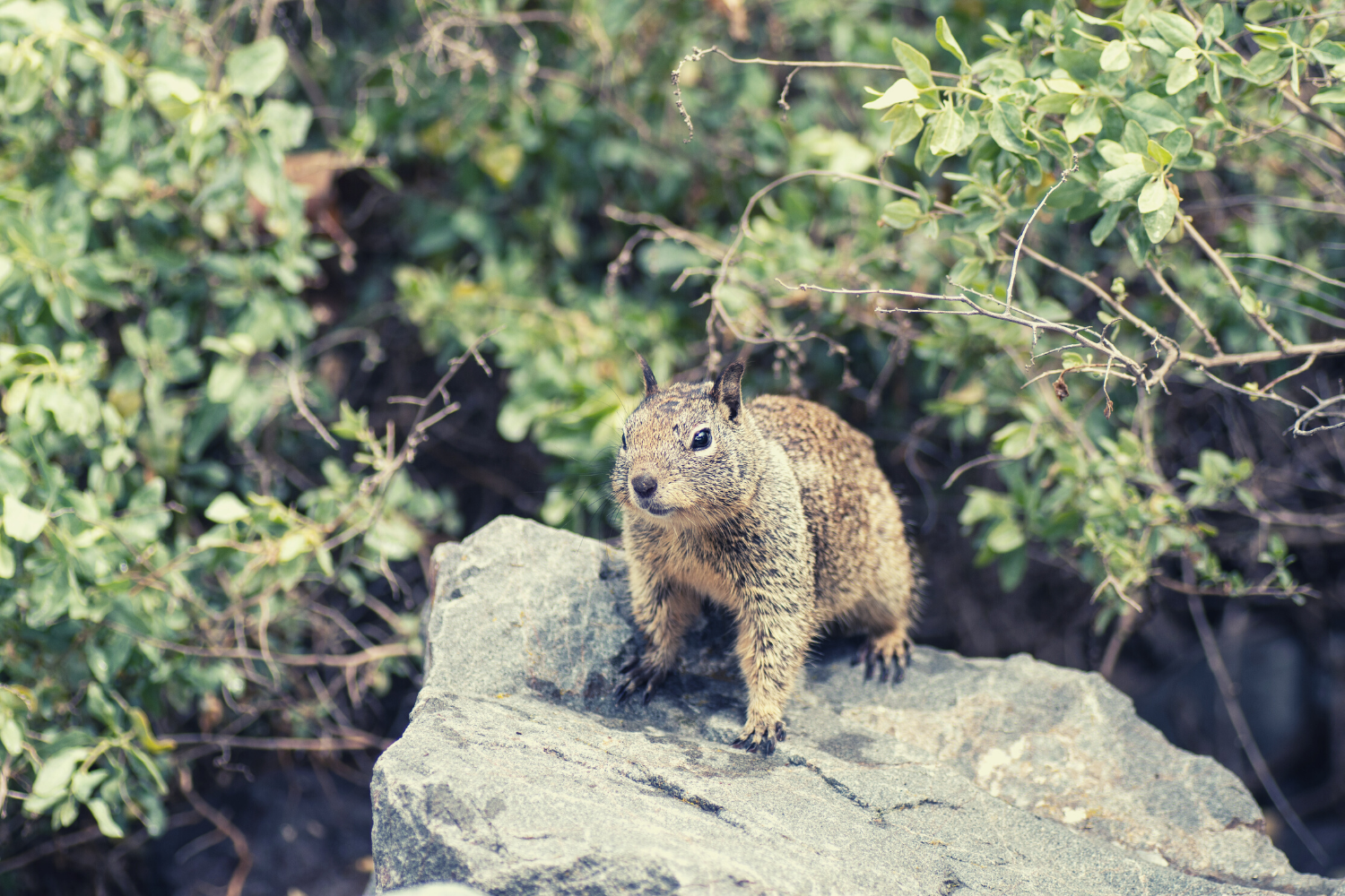 A squirrel on a rock on a sunny day