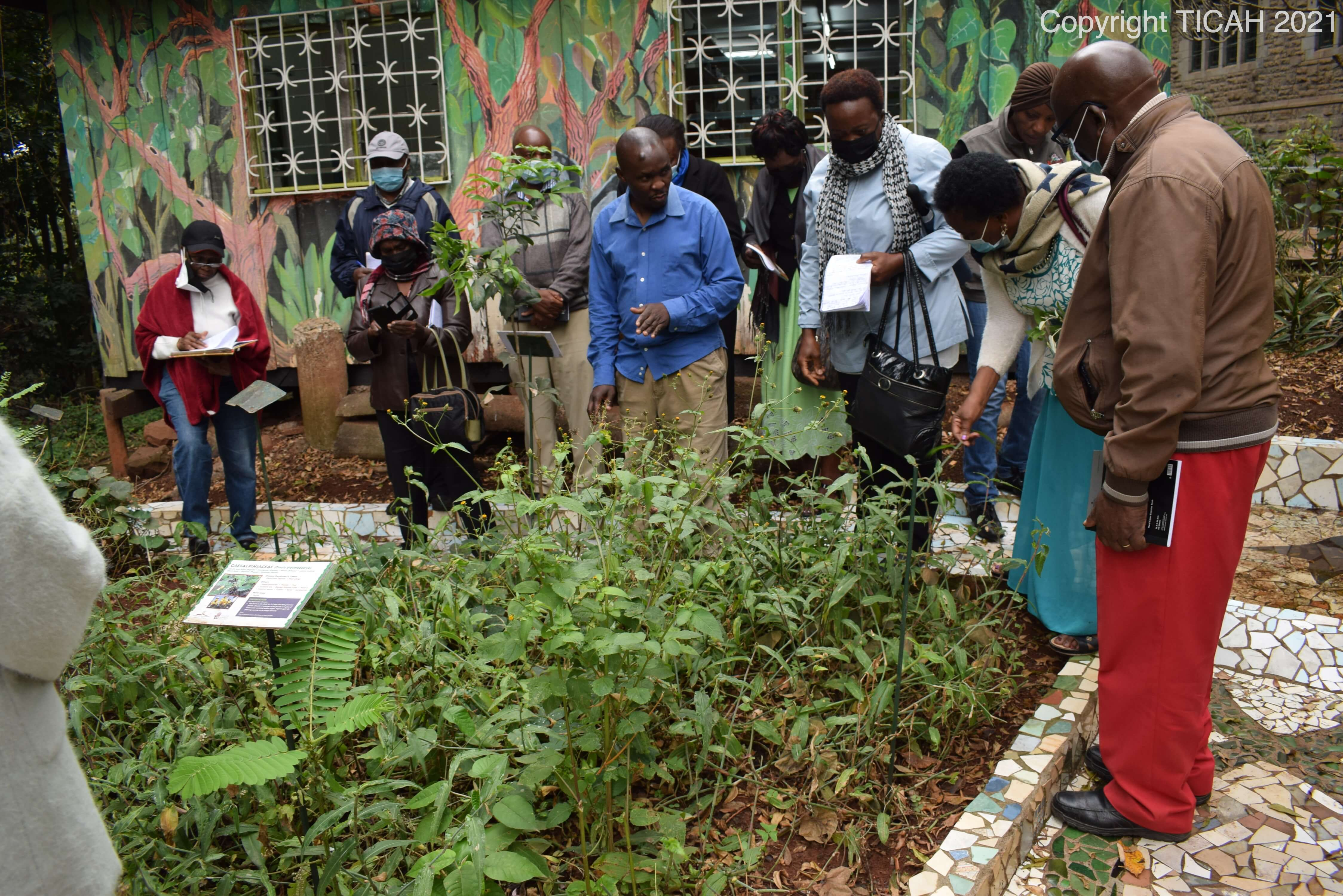 Learning about medicinal plants with the TICAH herbalist at the Medicine Shield Garden at NMK.