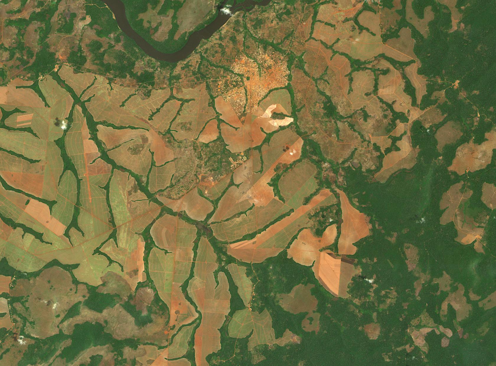 Acquiring Satellite Imagery for Predicting Deforestation