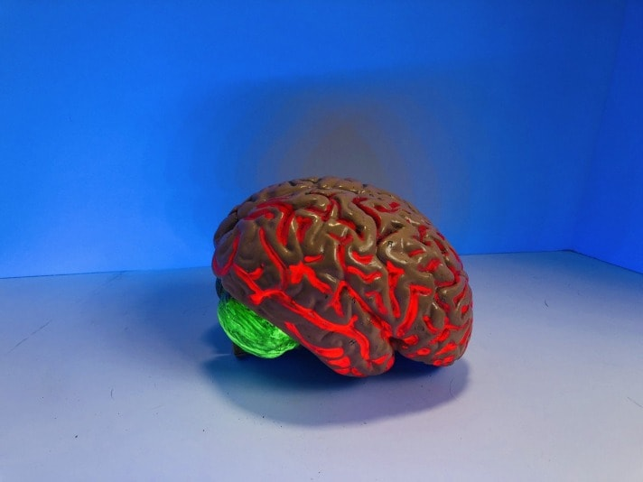 red color human brain