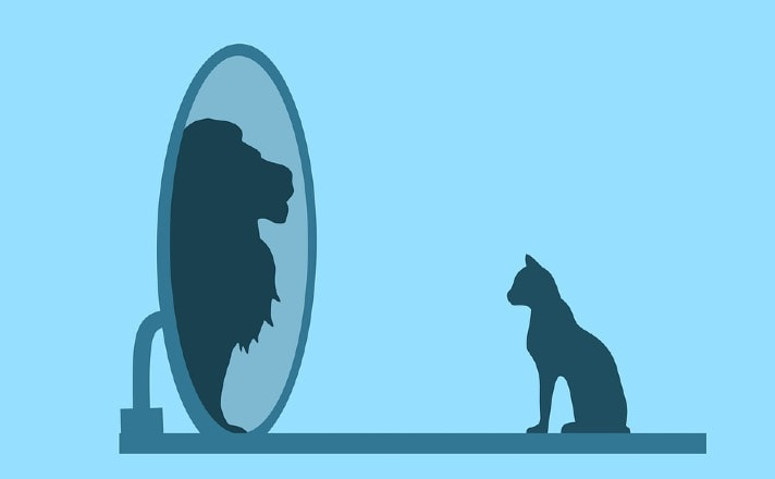 cat on blue background in front of a mirror reflecting a lion