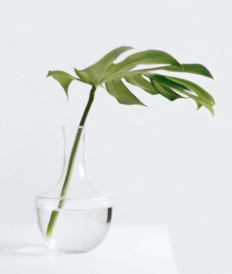 plant in a jug of water on a white desk