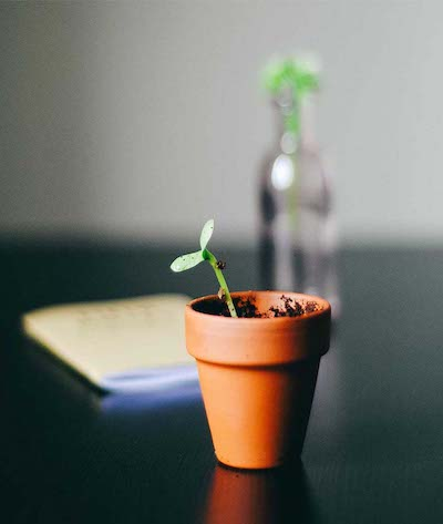 terracotta pot with a young plant on a black desk