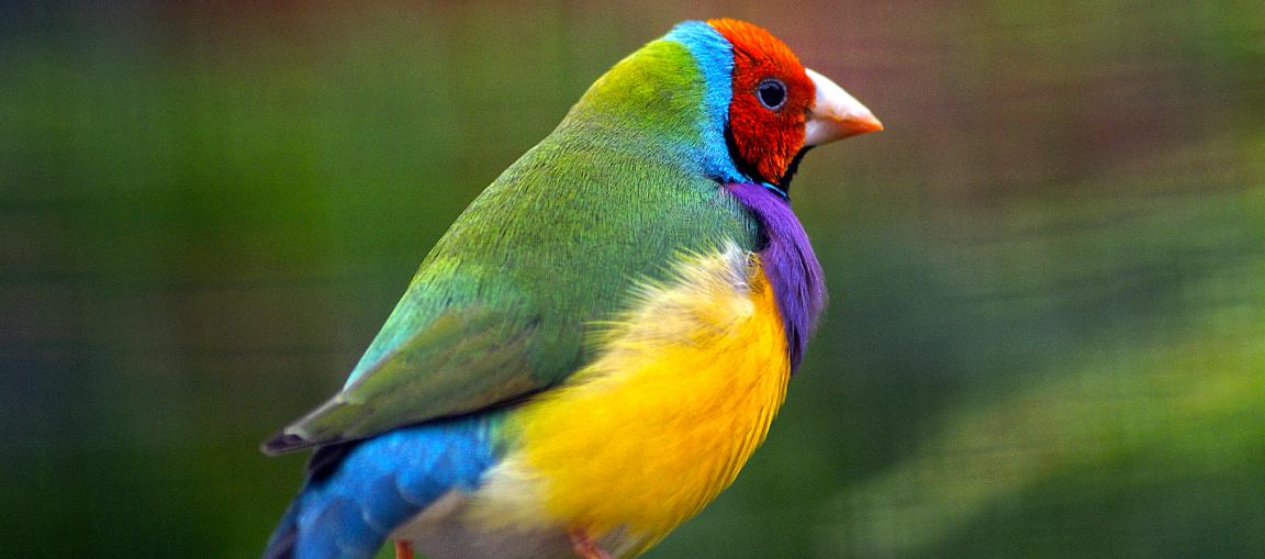 polymorphic bird adaptation