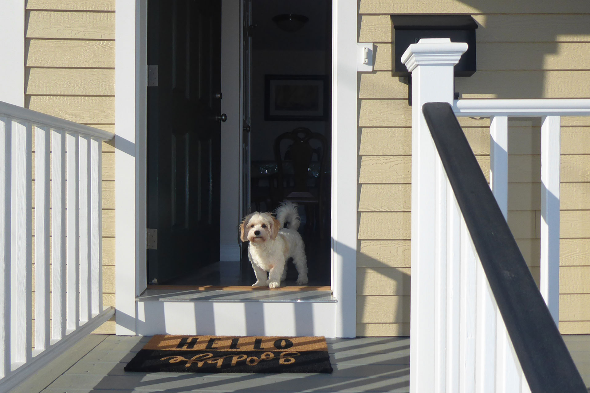 Really cute dog standing in the front door of a Pavillion development home.