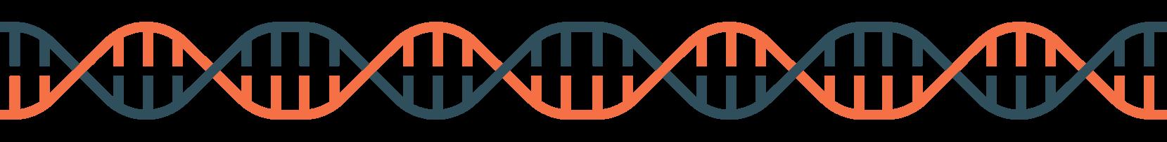 buyer persona ADN