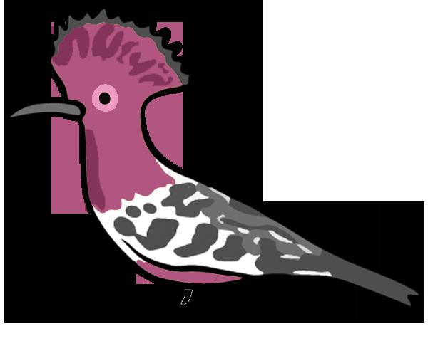 A cute tropical bird