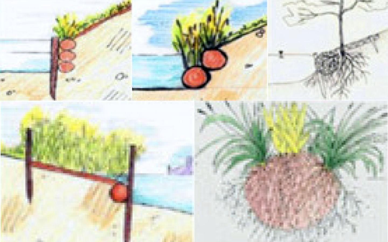 Kokosovi valji - erozijska zaščita strmih brežin
