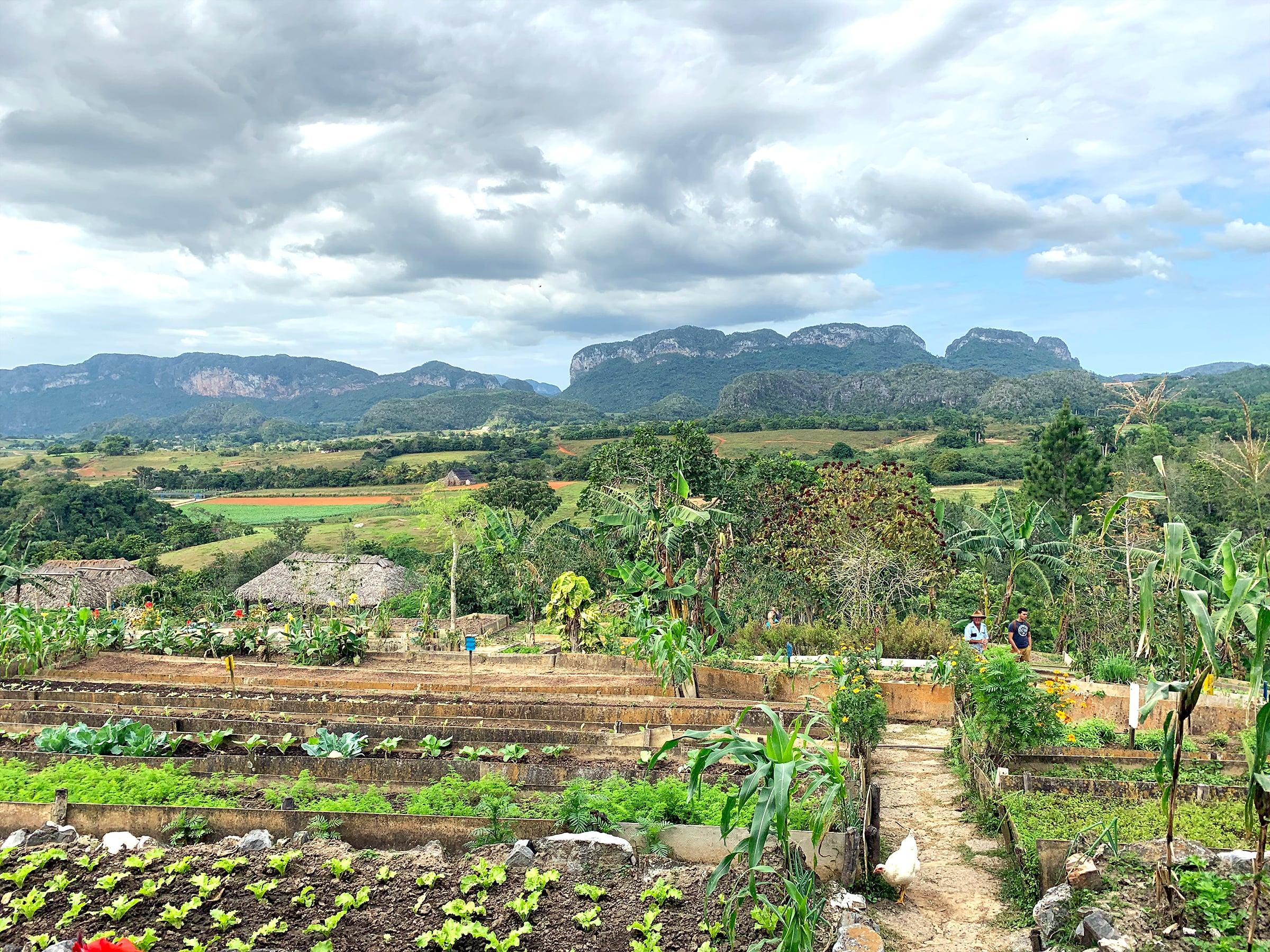 Farm landscape seen right outside of a restaurant in Vinales, Cuba