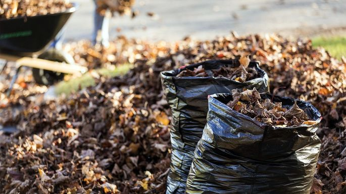 You might not be able to just leave your leaves on the curb...