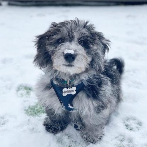 Miles - Team Dog