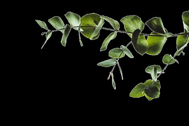 Plant_responsiveimage