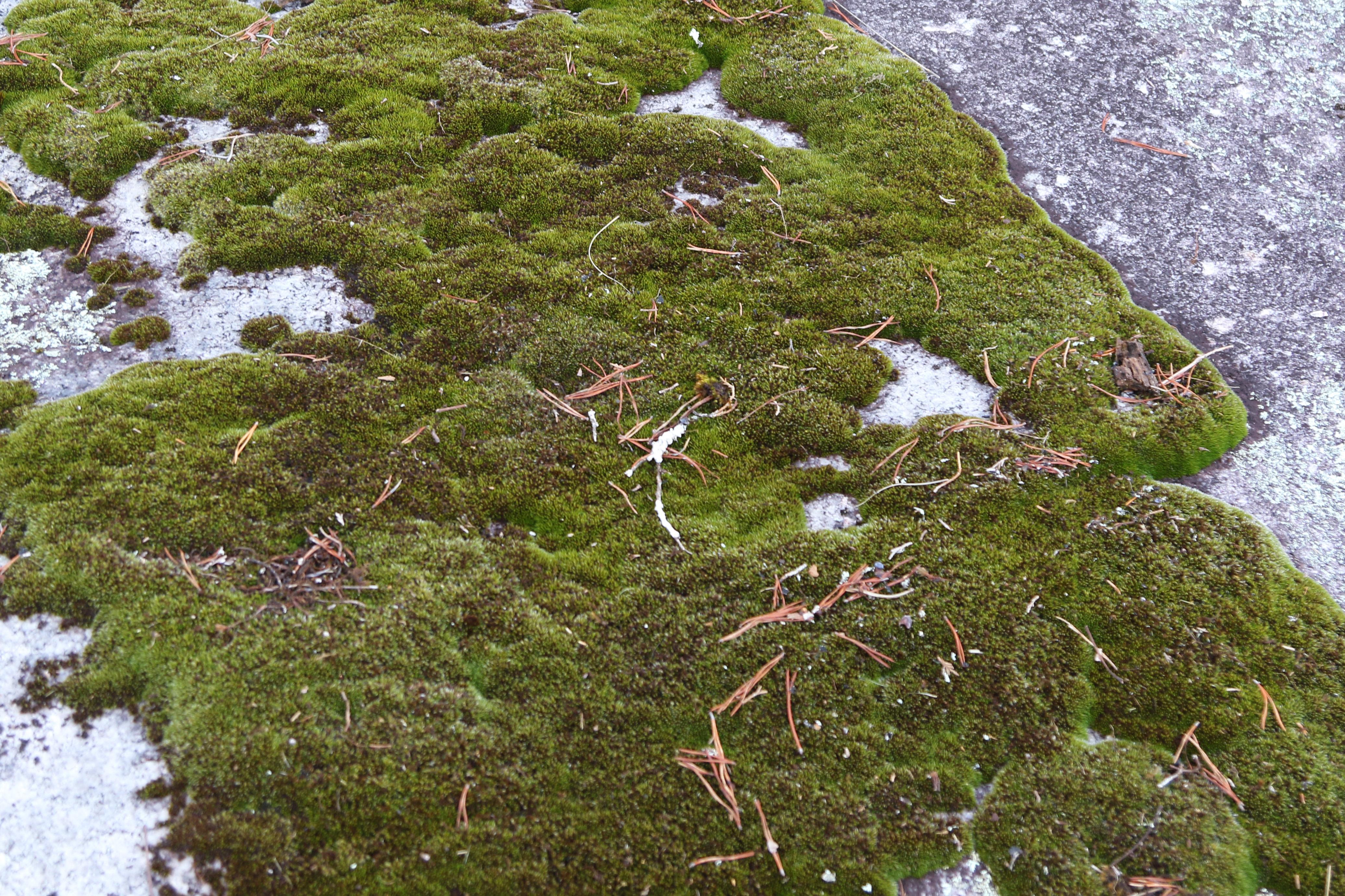 Green moss growing on flat rocks