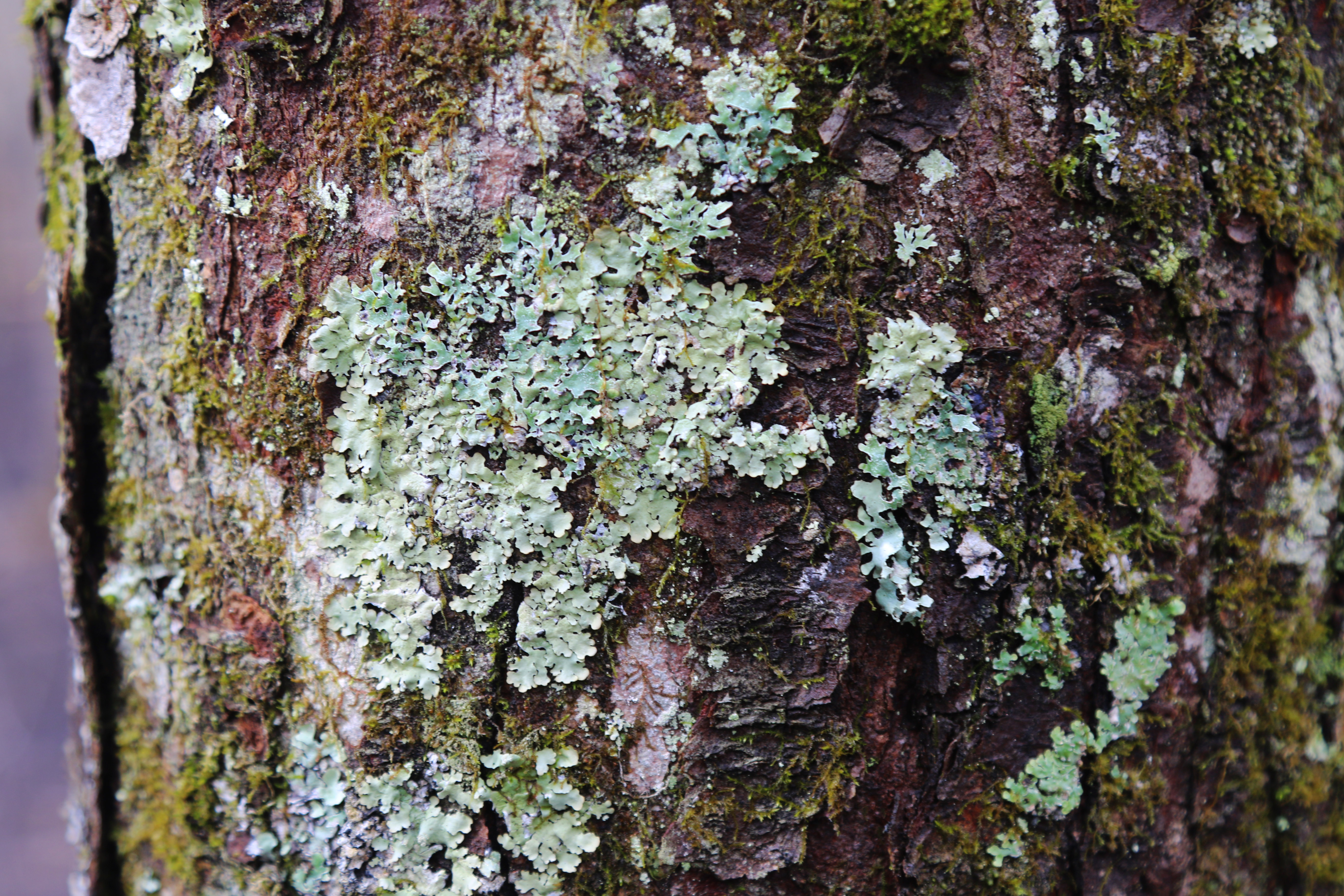 Moss and licehn growing on a tree
