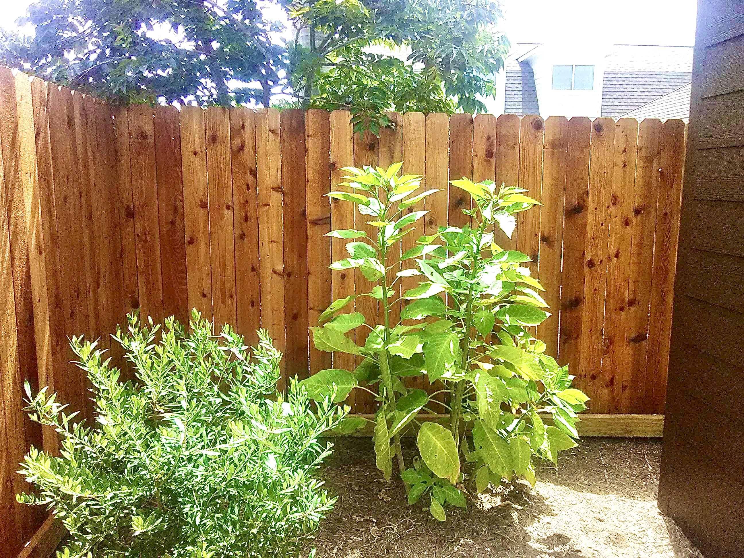 12-Fence