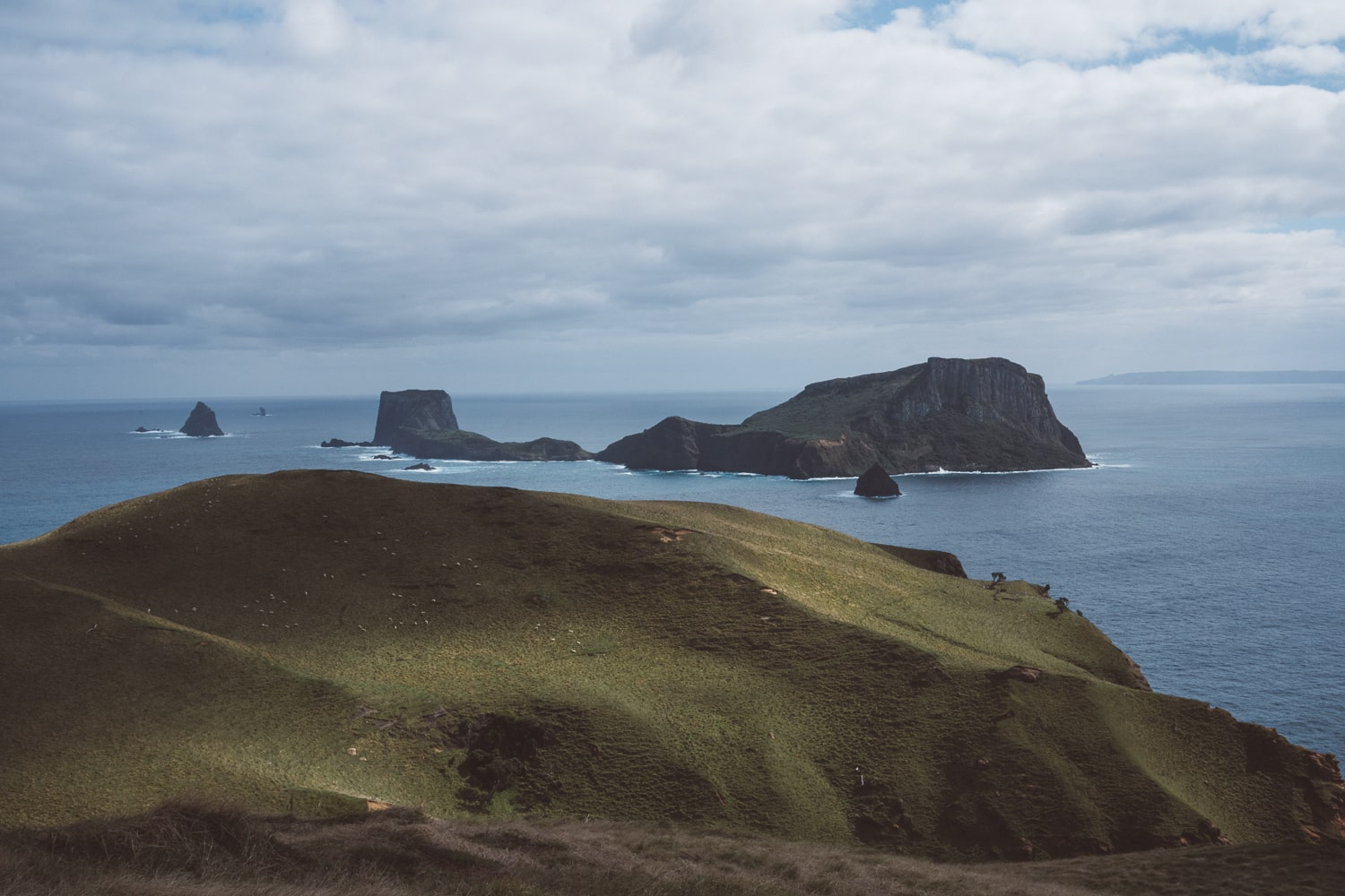 remote island in new zealand where the black robins live