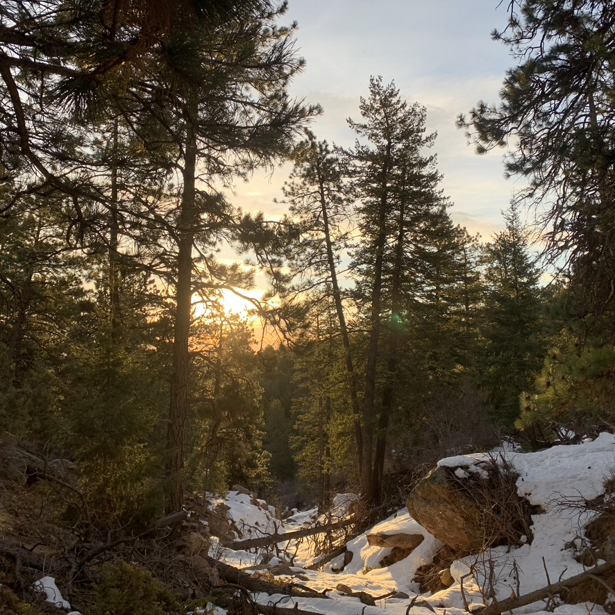 the sun rising between the trees in the mountains with snow covered rocks on the ground