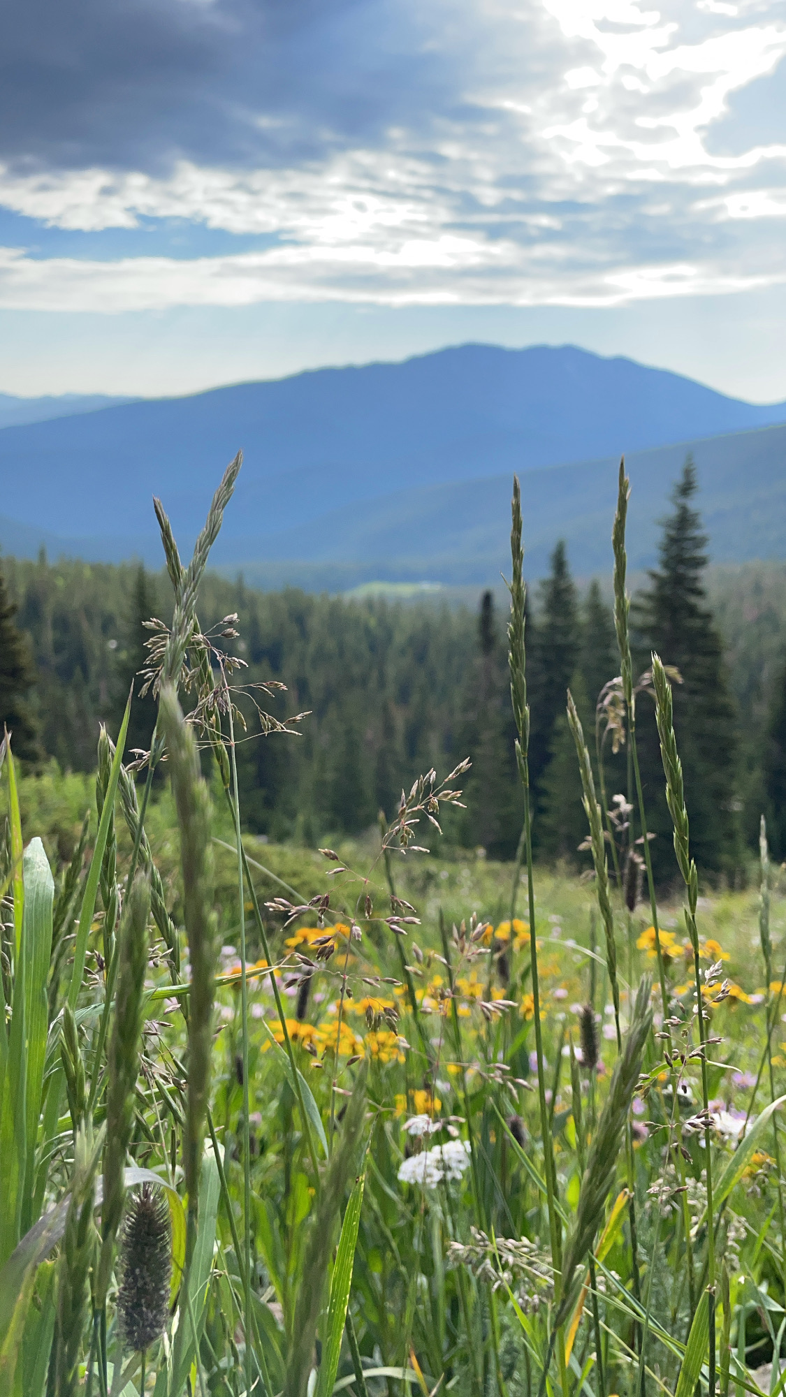 a photo of wildflowers with unfocused mountains in the distant background