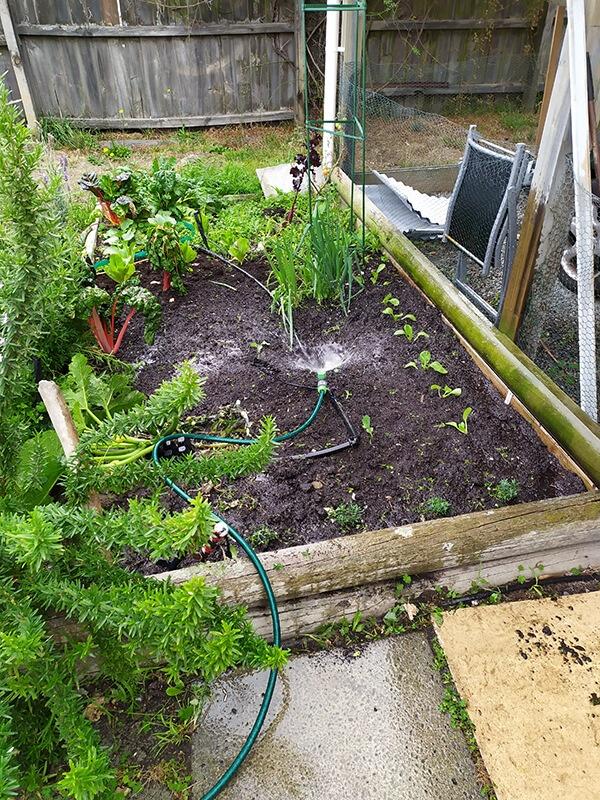 Sara's garden