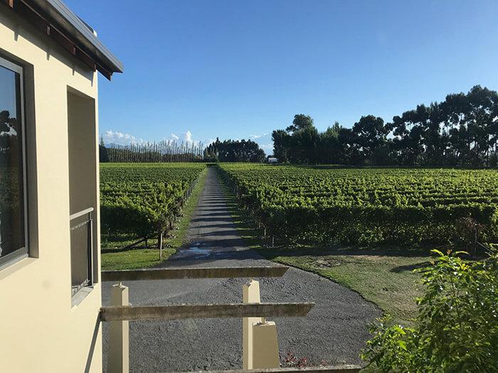 Harvesting vineyard