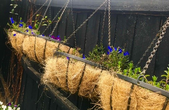 Hanging basket on fence