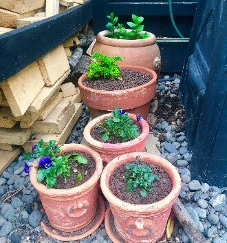 Potted herbs and flowers