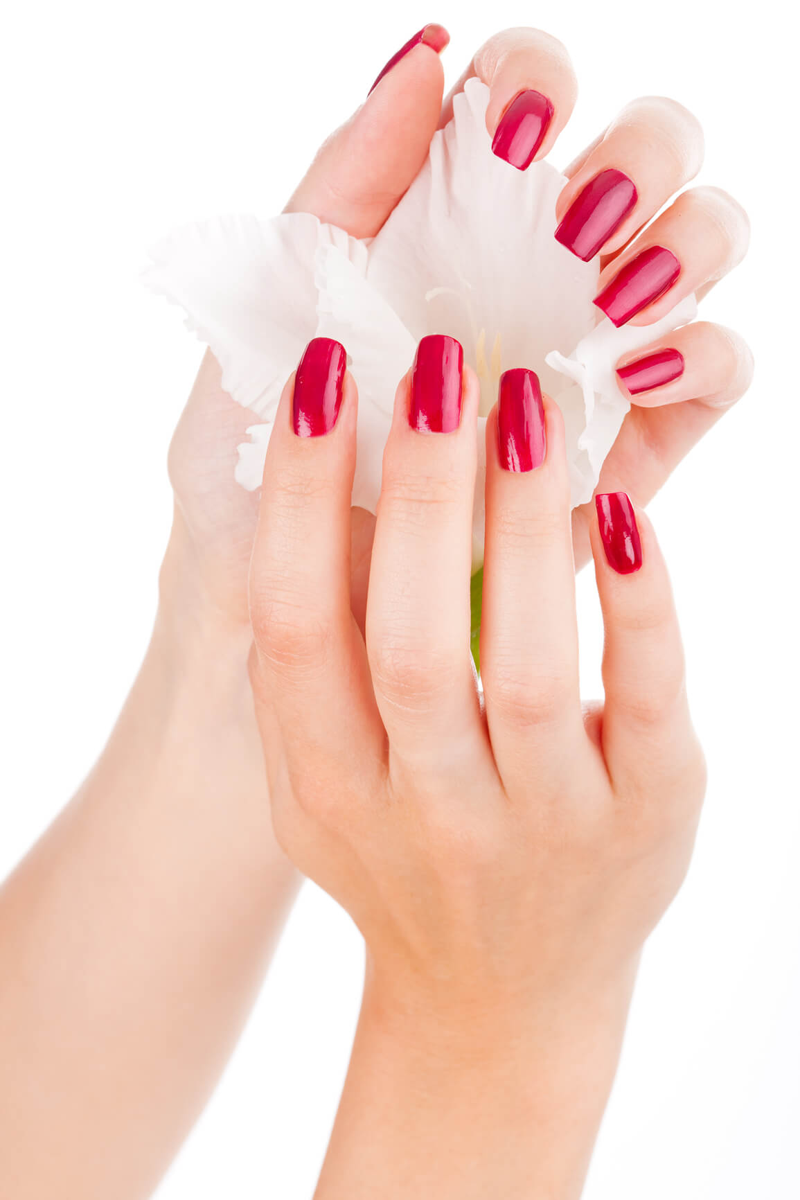 close up of a lady's hands with red nail polish holding onto a white lily