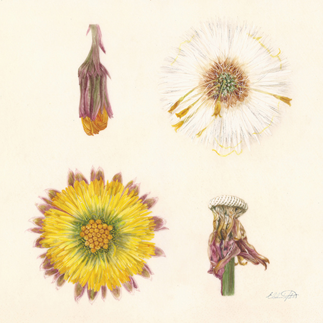 An Introduction to Botanical Illustration