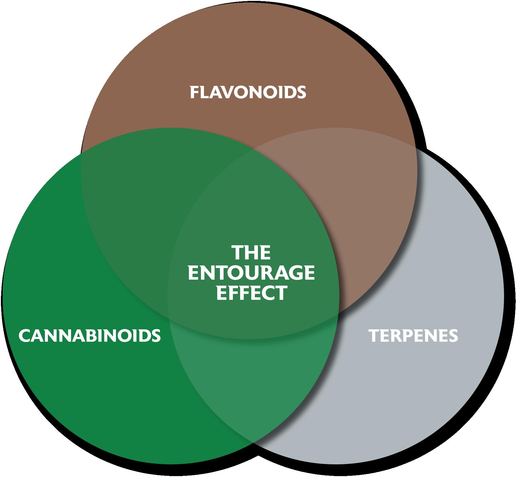 The Entourage Effect - Flavonoids, Cannabinoids, Terpenes