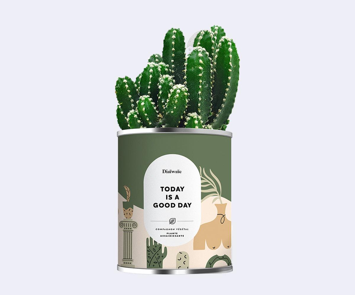 Cactus en pot personnalisé | Pandacola