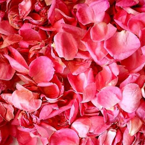 Rose Petals   Dried Organic Herb