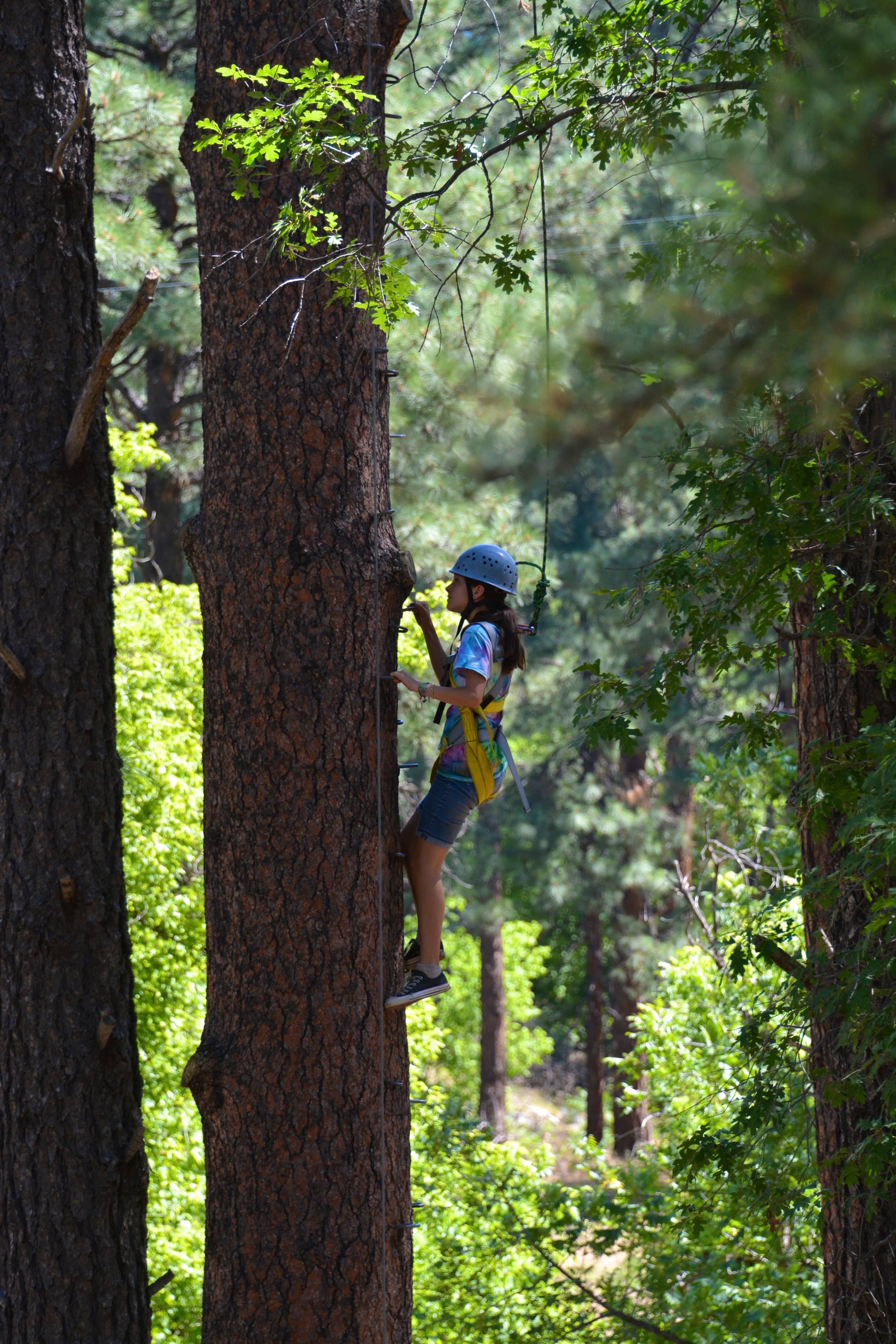 Person climbing a tree