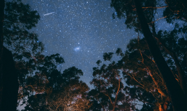 Night sky looking through the trees