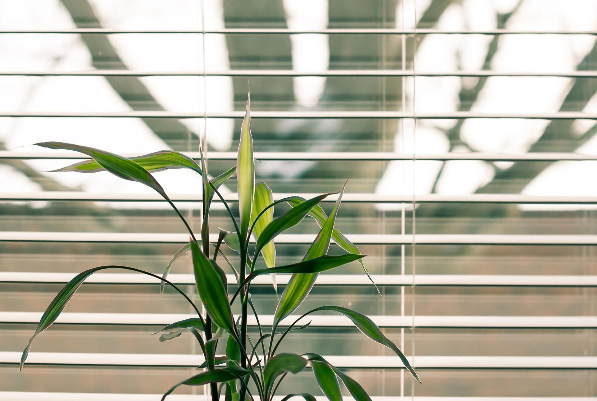 Květina u okna s žaluziemi