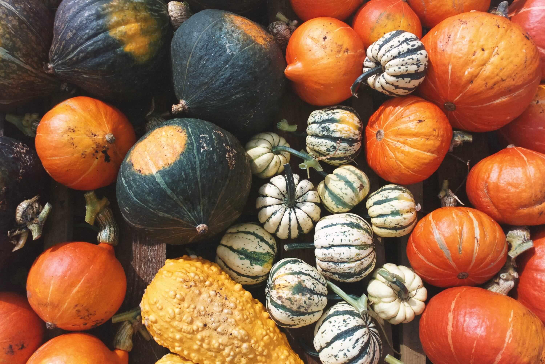 A range of colourful pumpkins