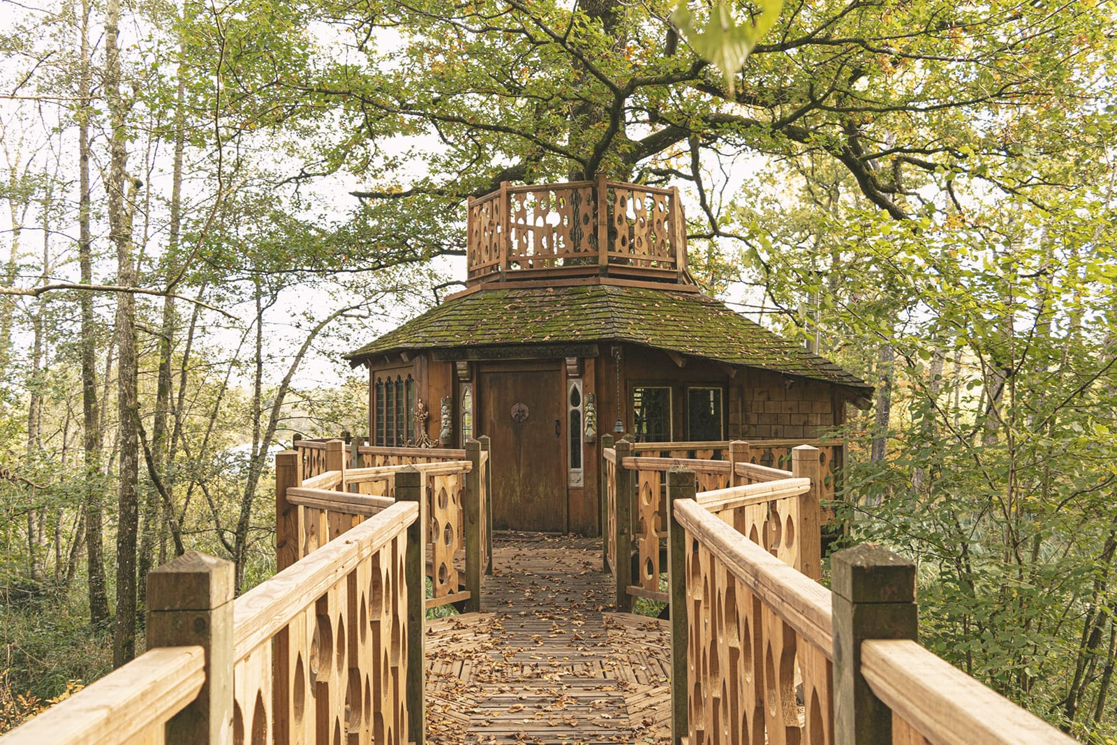 Treehouse in the tree canopy