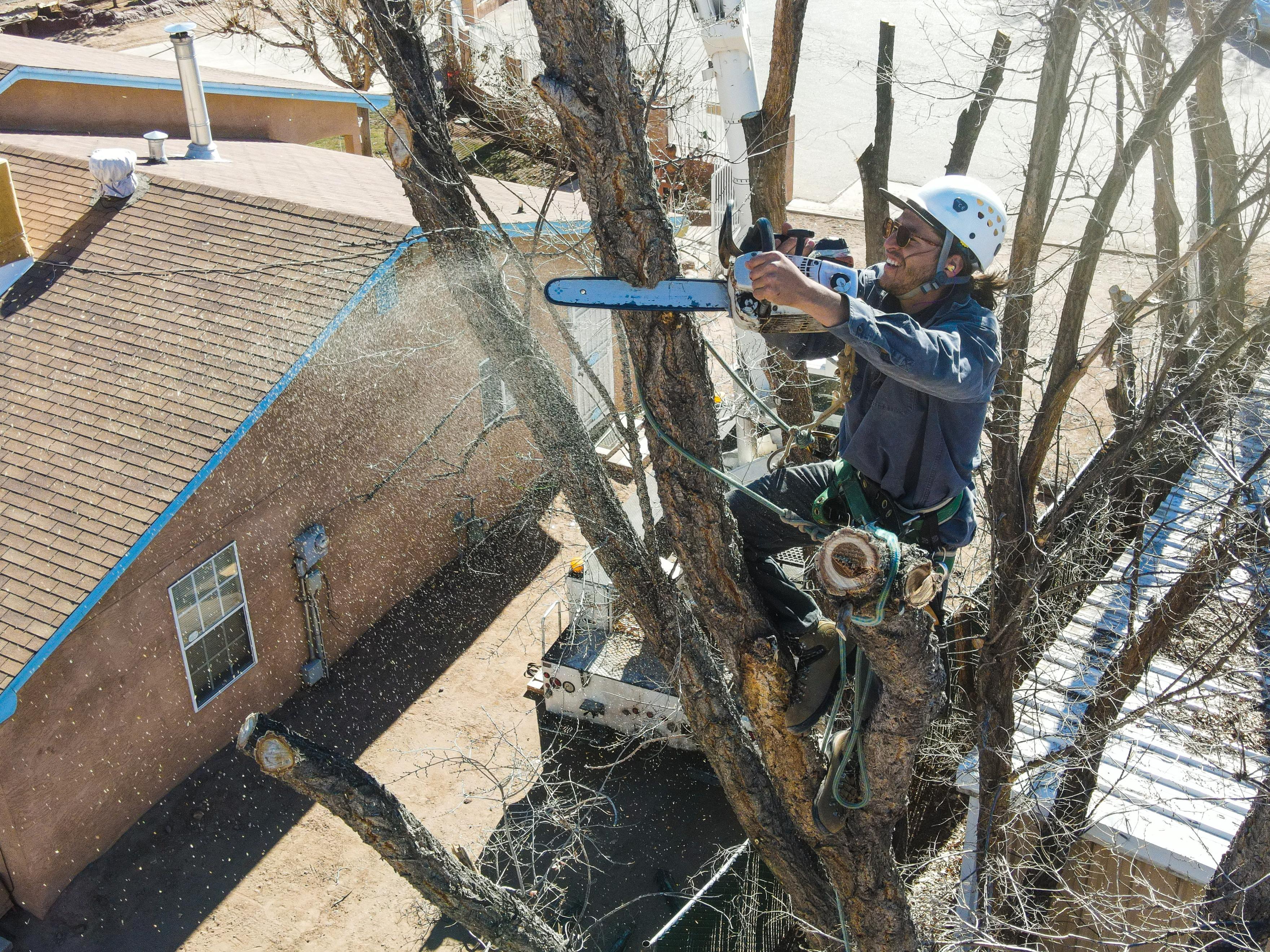 Legacy Tree Care
