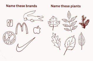 brands vs plant