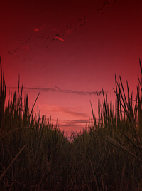 A rice paddy, and a red sky upon the horizon.